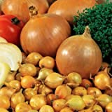 Park Seed Candy Hybrid Onion Seeds Photo, best price $6.50 new 2020