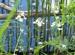 Photo Water Violet, white