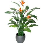 Bird of paradise, Crane Flower, Stelitzia