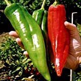 NuMex Big Jim Chili Pepper Seeds ► Organic NuMex Pepper Seeds (10+ seeds) Award Winning 12+ inches long! ◄ by PowerGrow System Photo, best price $1.81 new 2020