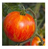 David's Garden Seeds Tomato Beefsteak Mr. Stripey (Multi) SL0089 50 Non-GMO, Heirloom Seeds Photo, best price $7.95 new 2019