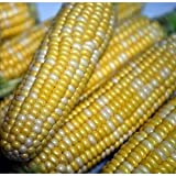 Seeds and Things Peaches and Cream Sweet Corn - 50 Seeds Photo, best price $1.91 new 2018