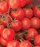 Cherry Sweetie Organic Tomato 200 Seeds By Jays Seeds Photo, best price $5.99 new 2018