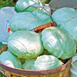 Park Seed Tropic Giant Hybrid Cabbage Seeds Photo, best price $4.75 new 2019