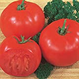 Burpee 'Super Beefsteak' | Red Beefsteak Slicing Tomato | 175 Seeds Photo, best price $7.69 new 2019