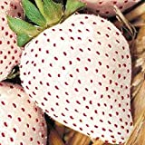 WHITE SOUL STRAWBERRY 100 SEEDS Fragaria vesca Containers Heirloom Non-GMO USA Photo, best price $1.94 new 2019