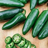 Jalepeno Tam Hot Peppers Seeds, 150+ Premium Heirloom Seeds!, 99.7% Purity, ON SALE!, (Isla's Garden Seeds), Non GMO Organic Survival Seeds,Highest Quality! Photo, best price $5.99 new 2018