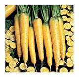 David's Garden Seeds Carrot Yellowstone SL9374 (Yellow) 500 Open Pollinated Seeds Photo, best price $6.95 new 2019