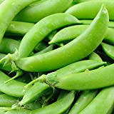 Sugar Lace II Snap Pea Garden Pea Seeds (Sugar Snap), 50+ Premium Heirloom Seeds, ON SALE!, (Isla's Garden Seeds), Non Gmo Organic, 90% Germination Rates, Highest Quality Seeds, 100% Pure Photo, best price $5.99 new 2019