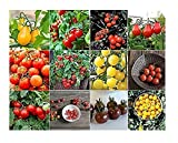 David's Garden Seeds Collection Set Tomato Cherry NEP933V (Multi) 12 Varieties 600 Seeds (Non-GMO, Open Pollinated, Heirloom, Organic) Photo, best price $36.95 new 2019