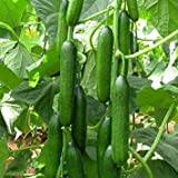 Cucumber Beit Alpha (60 seeds) Fresh Persian Flavor Photo, best price $1.48 new 2020
