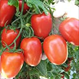 TOMATO, ROMA TOMATO SEED, ORGANIC, NON- GMO, 25 SEEDS PER PACKAGE Photo, best price $1.53 new 2018