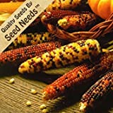 Seed Needs 500 Seeds, Ornamental Corn Carousel Mixture (Zea mays) Seeds Photo, best price $7.85 new 2020