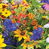 David's Garden Seeds Wildflower Butterfly Hummingbird Mix SS30062A 500 Open Pollinated Seeds Photo, best price $8.95 new 2018