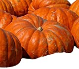 Atlantic Giant Pumpkin Seeds - These Are the Record Breaking Pumpkins! Photo, best price $10.99 new 2019