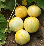 David's Garden Seeds Cucumber Pickling Lemon OS329 (Yellow) 50 Organic Heirloom Seeds Photo, best price $8.45 new 2018