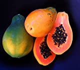 Package of 50 Strawberry Papaya Seeds Tropical Fruit Tree Seeds Home Garden Plant Photo, best price $2.09 new 2018