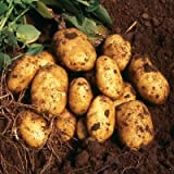 SEED POTATOES - 1 lb. Nicola Organic Grown Non GMO Virus & Chemical Free Ready for Spring Planting Photo, best price $8.24 new 2019