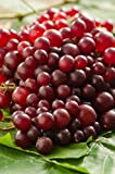 Muscadine Grape Plant - RazzMatazz! Rare variety with delicious flavor and 5x as many clusters as other grapes. Photo, best price  new 2018