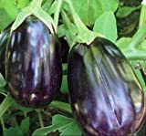 Black Beauty Egg Plant Seeds, 100+ Premium Heirloom Seeds, ON SALE!, (Isla's Garden Seeds), Non Gmo Organic, 90% Germination Photo, best price $5.99 new 2018