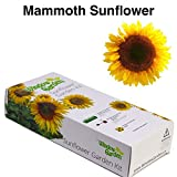 Garden Starter Kit (Mammoth Sunflower) – Grow sun flower seed in a mini greenhouse, then plant a beautiful patch of Sunflowers in your backyard. It's easy, fun, and a great gift for adults and kids. Photo, best price $9.99 new 2018