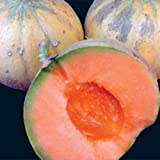 Heirloom French CHARENTAIS MELON Cantaloupe✽75 SEEDS✽Sweet✽FLAT RATE COMBINE S/H Photo, best price $8.50 new 2018