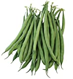 Burpee French Filet Bush Bean Seeds 2 ounces of seed Photo, best price $9.69 new 2018