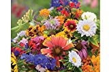 David's Garden Seeds Flower Butterfly Hummingbird Mix SS3062 (Multi) 500 Non-GMO, Open Pollinated Seeds Photo, best price $7.95 new 2019