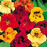 Outsidepride Nasturtium Seed Mix - 1/4 LB Photo, best price $6.99 new 2018