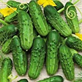 Pioneer Cucumber Seeds, 125+ Premium Heirloom Seeds, Gardeners Choice for pickling or fresh, (Isla's Garden Seeds), Non Gmo Organic Survival Seeds, 100% Pure, 90% Germination, Highest Quality! Photo, best price $5.99 new 2019