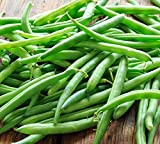 Blue Lake Bush Green Bean Seeds, 50+ Premium Heirloom Seeds, On Sale, (Isla's Garden Seeds), Non Gmo Organic, 90% Germination Rates, 100% Pure, Highest Quality Seeds Photo, best price $5.99 new 2020