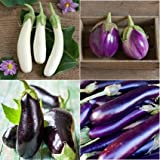 David's Garden Seeds Collection Set Eggplant RSL432 (Multi) 4 Varieties 200 Seeds (Open Pollinated, Heirloom, Organic) Photo, best price $15.45 new 2018