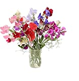 David's Garden Seeds Flower Sweet Pea Royal Mix SL1319 (Multi) 50 Non-GMO, Heirloom Seeds Photo, best price $6.95 new 2019