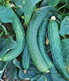 Heirloom Suyo Long Cucumber Seed by Stonysoil Seed Company CERTIFIED ORGANIC SEEDS Photo, best price $7.95 new 2018