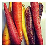 David's Garden Seeds Carrot Rainbow Blend SL2279 (Multi) 500 Non-GMO, Open Pollinated Seeds Photo, best price $6.95 new 2020