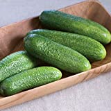 David's Garden Seeds Cucumber Pickling Harmonie CS7748 (Green) 25 Non-GMO, Hybrid Seeds Photo, best price $7.95 new 2020