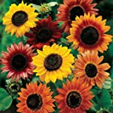 Park Seed Large Flowered Mix Sunflower Seeds Photo, best price $5.95 new 2018