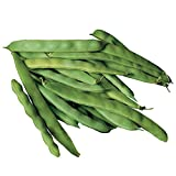 Burpee Roma II Bush Bean Seeds 2 ounces of seed Photo, best price $6.89 new 2018