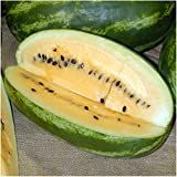 Package of 20 Seeds, Mountain Sweet Yellow Watermelon (Citrullus lanatus) Non-GMO Seeds by Seed Needs Photo, best price $3.65 new 2018