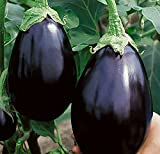 Black Beauty Eggplant Seed - 300 Heirloom Seeds - Non GMO - Neonicotinoid-Free Photo, best price $7.99 new 2018