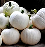 Cotton Candy Pumpkin 10 Seeds - NEW Photo, best price $3.95 new 2020