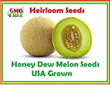 Honey Dew Green Melon, Heirloom Melon Seeds, Fruit Seeds 105 seeds. Honey Dew Melon Seeds Photo, best price $7.95 new 2018