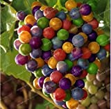 New Rainbow Grape Vine 50+ Seeds Photo, best price $2.43 new 2019