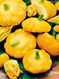 Mouse over image to zoom Details about COURGETTE PATISSON SUMMER SQUASH SUNBURST YELLOW PATTY PAN 10 ORGANIC seeds Photo, best price $9.99 new 2019