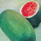 WATERMELON, CHARLESTON GREY, HEIRLOOM, ORGANIC 100 SEEDS, LARGE & SUPER SWEET Photo, best price $1.79 new 2019