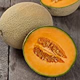 David's Garden Seeds Fruit Cantaloupe Hales Best OS113 (Orange) 50 Organic Heirloom Seeds Photo, best price $8.45 new 2018