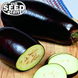 Black Beauty Eggplant Seeds - 150 Seeds Non-GMO Photo, best price $1.79 new 2019
