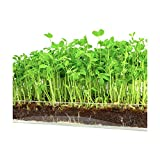 "Microgreen Organic Pea Shoot 3 Pack Refill–Pre-measured Soil + Seed, Use with Window Garden Multi-Use 15"" x 6"" Planter Tray. Easy and Convenient, Enough to Sprout 3 Crops of Superfood. Photo, best price $12.99 new 2019"