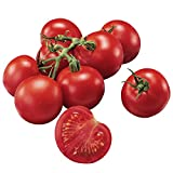 Burpee Fourth of July Tomato Seeds Photo, best price $6.78 new 2018