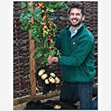 Tomtato Seeds Harvest Both Tomatoes AND Potatoes From This Unique plant! All Natural - 5 pcs/lot Photo, best price $9.07 new 2018
